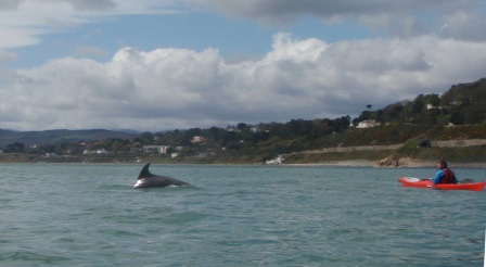 april_2012_dolphin_1